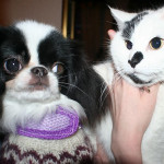 Állatbarátságok